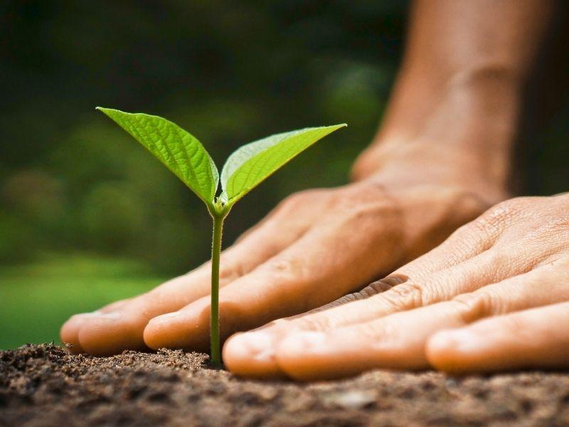 Plan de acción ecológica